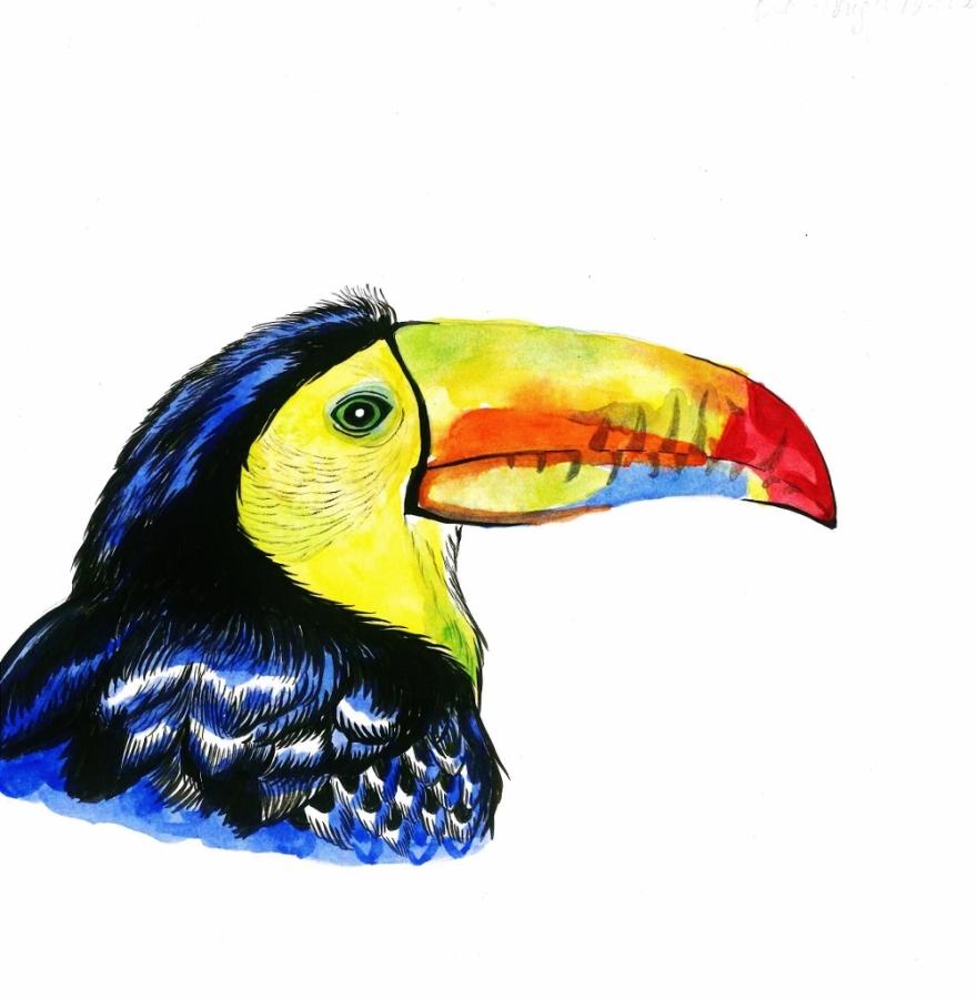 Toucan pam (1001x1024)