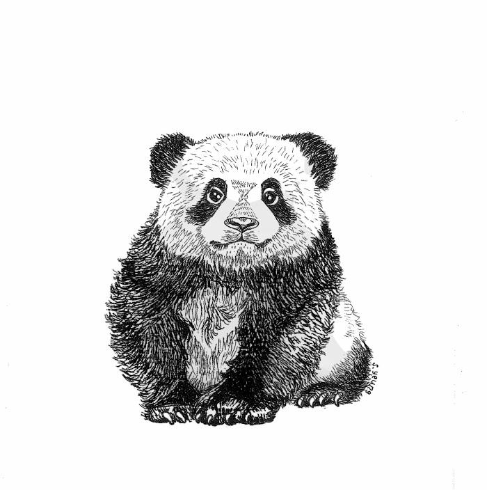 birthday panda jpg